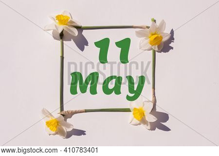 May 11th. Day 11 Of Month, Calendar Date. Frame From Flowers Of A Narcissus On A Light Background, P