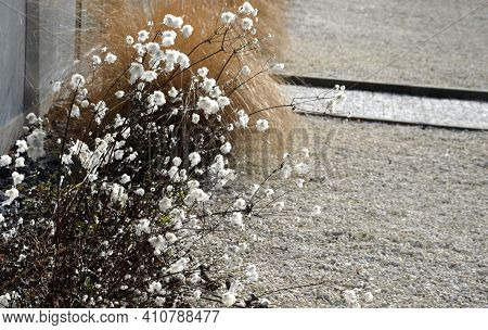 Spring Flowerbed Of Perennials With Dry Stems In A White Gravel Bed Near The Wall Of A Gray Office B