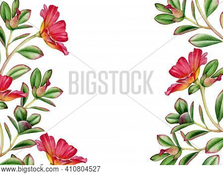 Watercolor Floral Background. Horizontal Frame With Place For Text. Red Succulent Flowers And Leaves