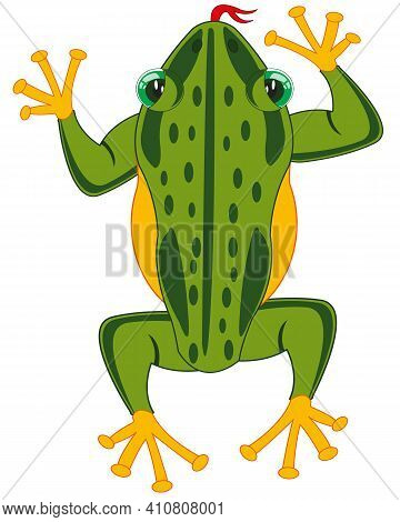 Amphibian Frog On White Background Is Insulated