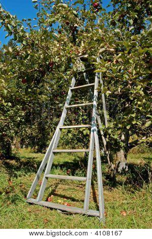 Apple Ladder