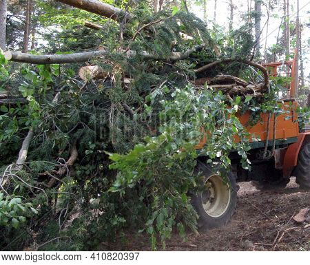 Wood Transport And Logistics In Forestry