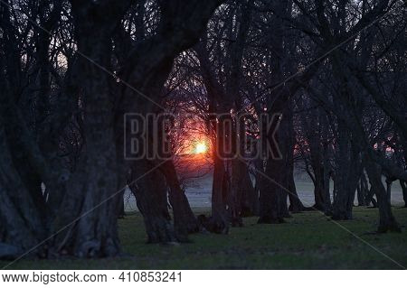 Old Oak Forest With Sunset Light In Macin Mountains, Romania