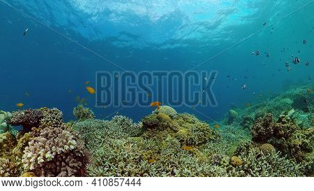 Colourful Tropical Coral Reef. Scene Reef. Seascape Under Water. Philippines.