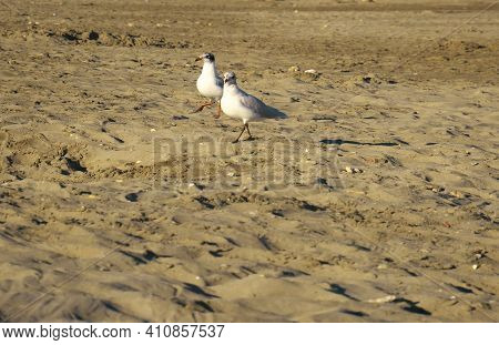Selective Focus Shot Of Seagulls On The Beach