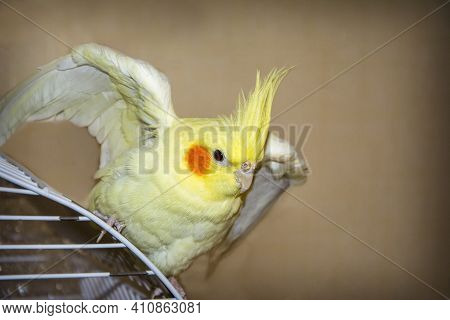 Indoors On Top Of The Cage Sits A Yellow Parrot.
