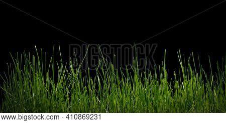 Grass background on black. High quality photo