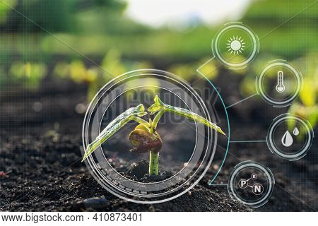 Smart Digital Agriculture Technology By Futuristic Sensor Monitoring And Data Collection Management
