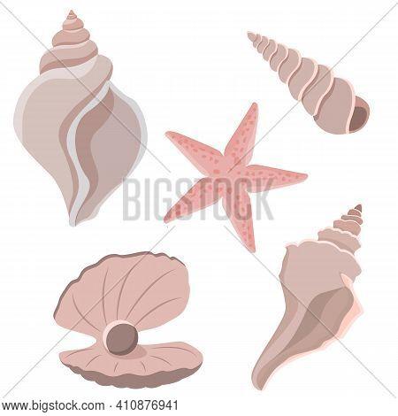 Set Of Seashells. Seashells Isolated On White Background. Starfish, Pearl, River And Sea Molluscs. V