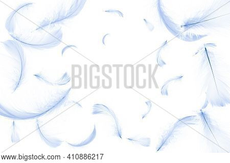 Feather Isolated. Abstract Bird Feather Texture Closeup Falling On White Background In Pattern Photo
