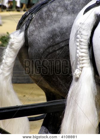 Braided Horsetail
