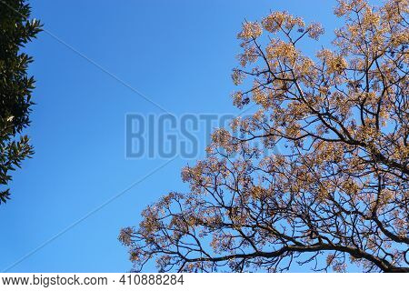Branches Of A Sprawling Tree Against The Sky. The Texture Of The Branches.