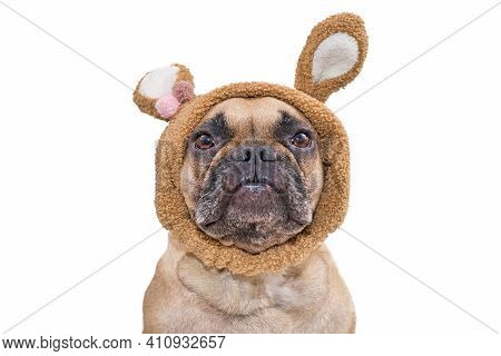 Head Of Fawn French Bulldog Dog Wearing Easter Bunny Costume Ears Headband Isolated On White Backgro