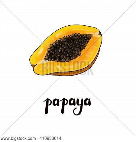 Papaya Fruit Illustration. Botanical Tropical Fruit. Ripe Papaya Freehand Drawing. Realistic Papaya.