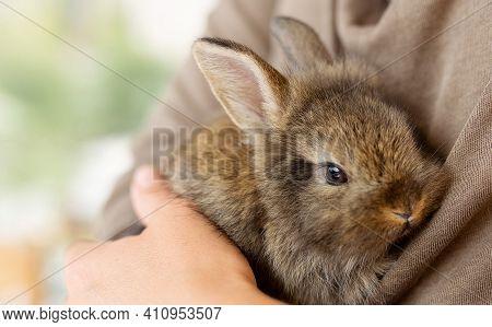 The Girl With The Rabbit. Holding Cute Fluffy Bunny.friendship With Easter Bunny. Spring Photo.close