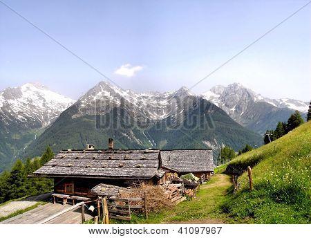Alpine pasture with Zillertal Alps