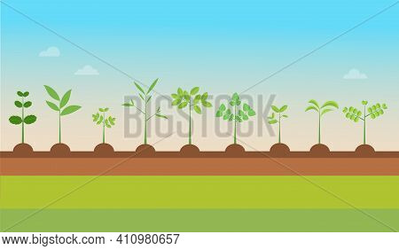 Plant Types Grow With Nature Background.vector Illustration.seedling Green Trees.plants Set On Groun