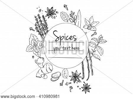 Herbs. . Herb Drawn Black Lines On A White Background. Vector Illustration. Background With Herbs Wi