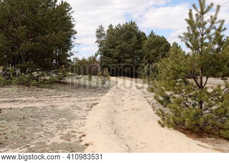 View Of An Sandy Forest Road On A Early Spring Day. Pine Forest. Sky, Clouds, Forest Background. San