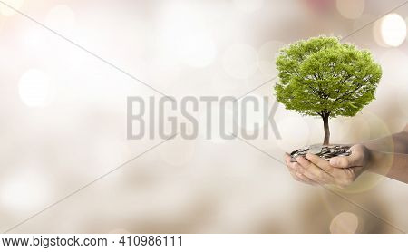 Tree Growth On Two Hand Holding Heap Of Coins On Blurred And Bokeh Background , Money Saving For Inv
