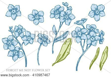 Vector Set Of Hand Drawn Pastel Forget Me Not Flower Stock Illustration
