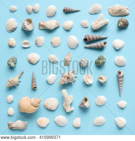 Seashells And Corals Collection On Pastel Blue Background. Top View. Flat Lay