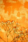 Orange color painted paper and dried flowers as background poster
