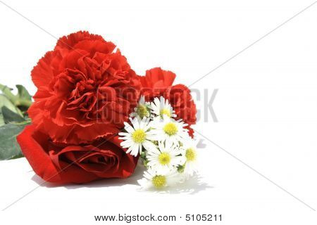 Rose  Carnations