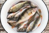 Fresh perch in a white basin with water on the old wooden stool poster