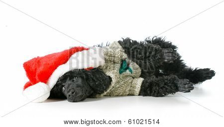 christmas puppy wearing santa hat and sweater  poster