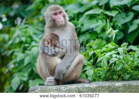 Playful monkeys near Swayambunath temple