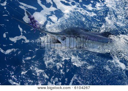 Atlantic White Marlin Big Game Sportfishing