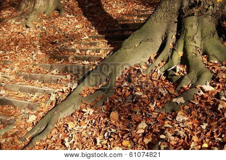 Roots in leaves