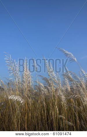 Meadow of Kash