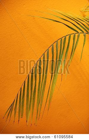 Palm Frond Against A Textured Orange Wall