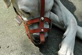 A sleeping mixed breed dog with his muzzle. poster