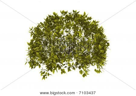 Decorative Bush With Clipping Path