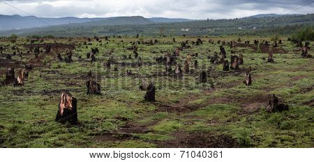 Stumps on the valley caused by deforestation and slash and burn type of agriculture of Madagascar poster