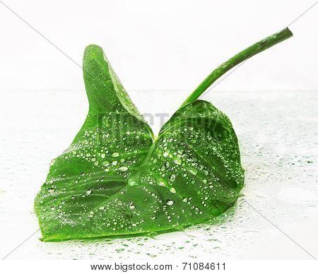 Big green leaf