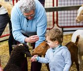 A grandmother helps her grandson feed farm animals at a fall fair. poster