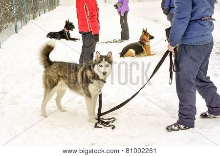Dogs In A Dog Training Course In A Winter Day