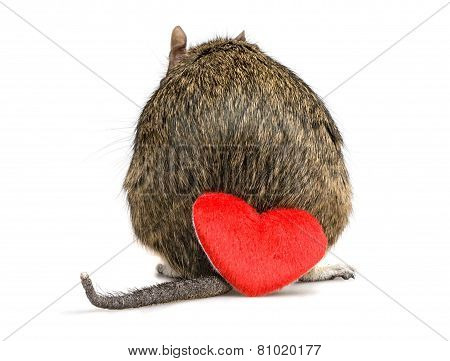 shy small rodent back with tail and red plush heart on valentine day poster