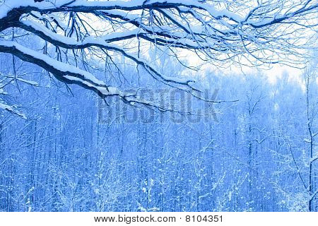 Blue Morning In Wood