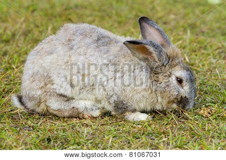 White rabbit in the green grass.