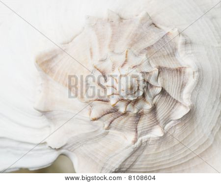 macro shot of seashell