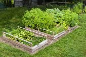 Three raised garden beds growing fresh vegetables in a backyard poster