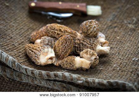 Fresh morel mushrooms / morels