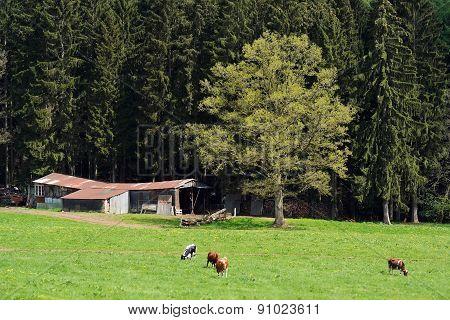 Pasturage