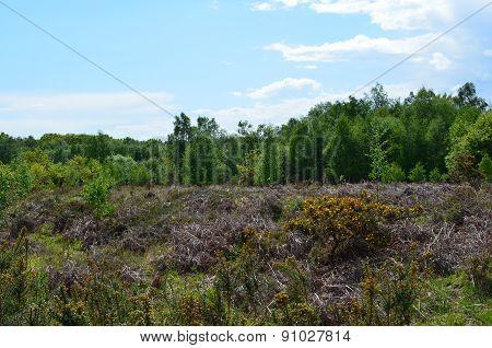 Open English heathland in Sussex.
