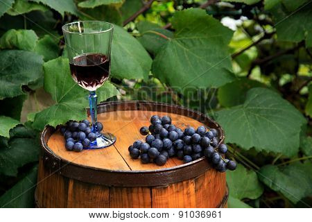 Grapes and a Glass of Wine on Oak Barrel In Vineyard